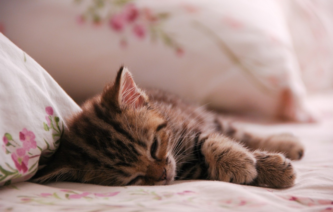 Photo wallpaper animals, cat, kitty, sleep, kitten, cat, animal, sleep