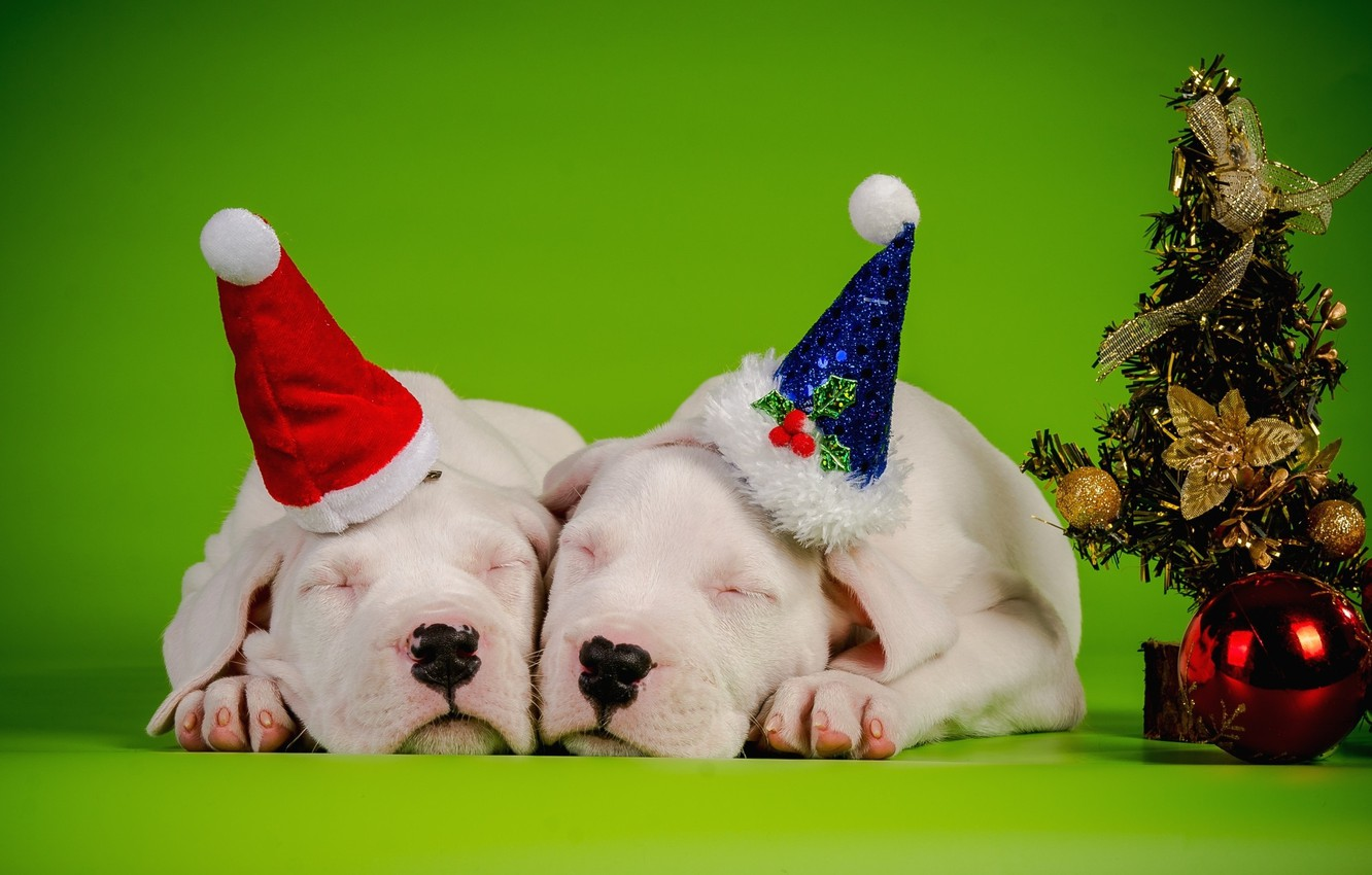 Photo wallpaper dogs, decoration, new year, pair, Background, tree, sleep, caps
