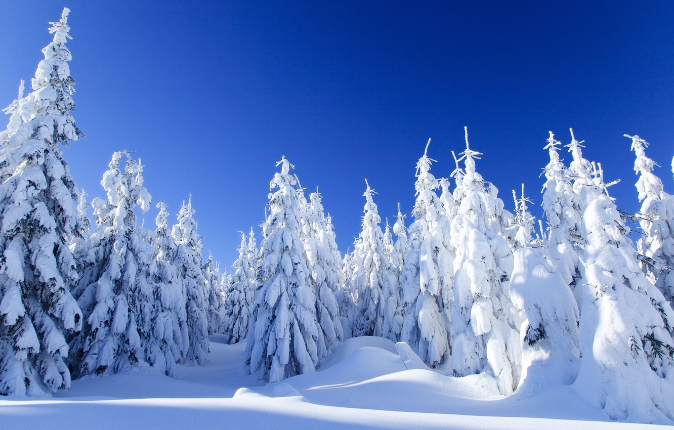Photo wallpaper winter, forest, snow, landscape, nature, spruce, frost