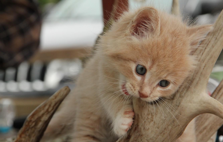 Photo wallpaper baby, horns, kitty