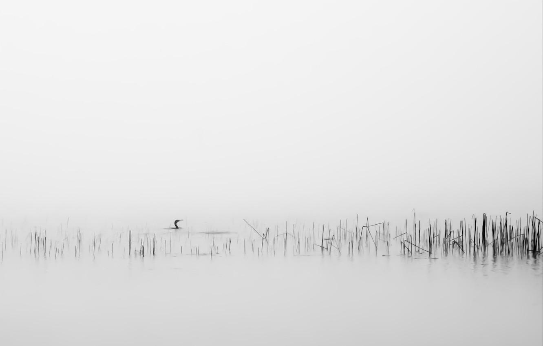 Photo wallpaper fog, background, bird, reed