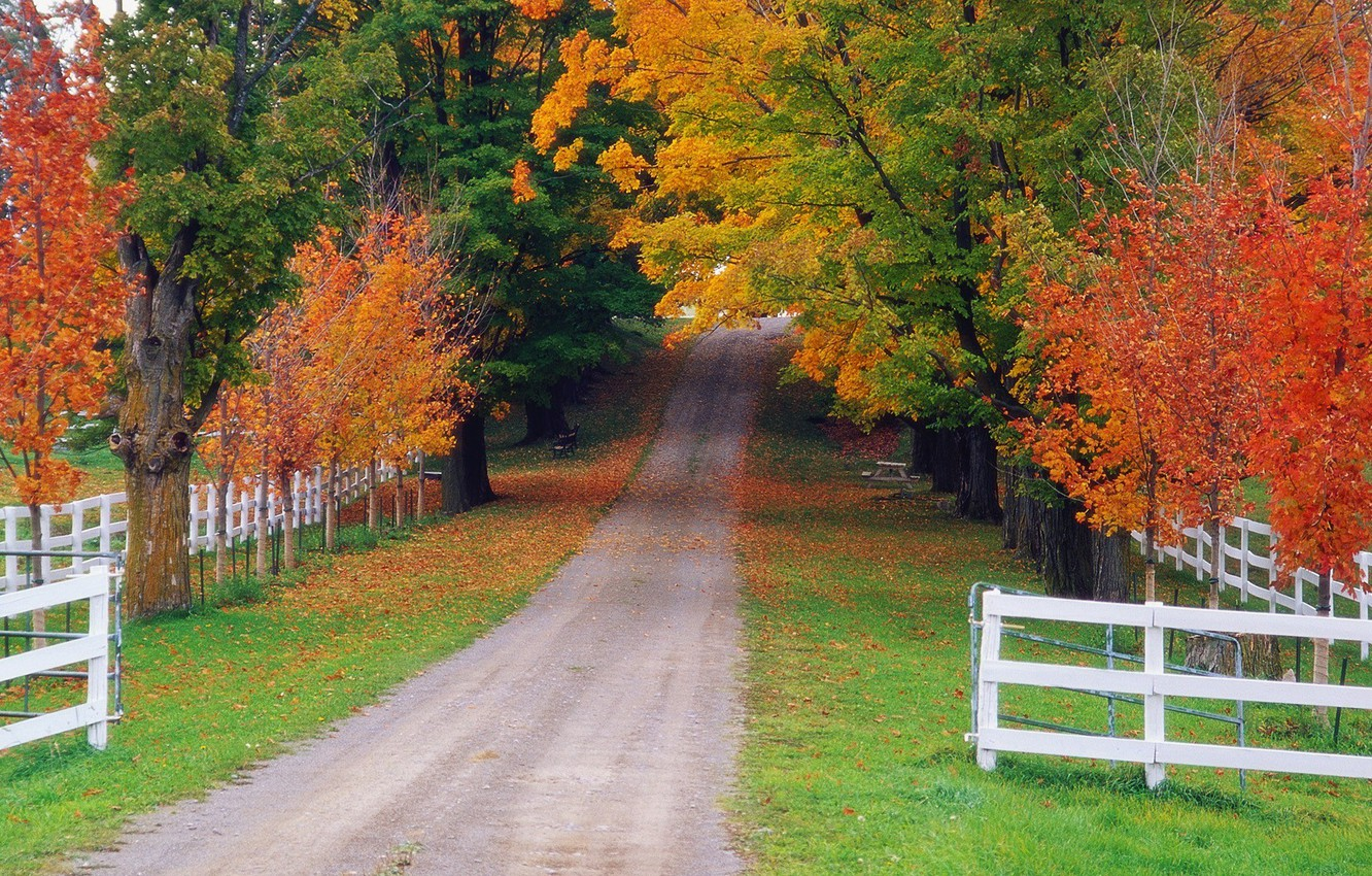 Photo wallpaper road, autumn, forest, the fence, Nature