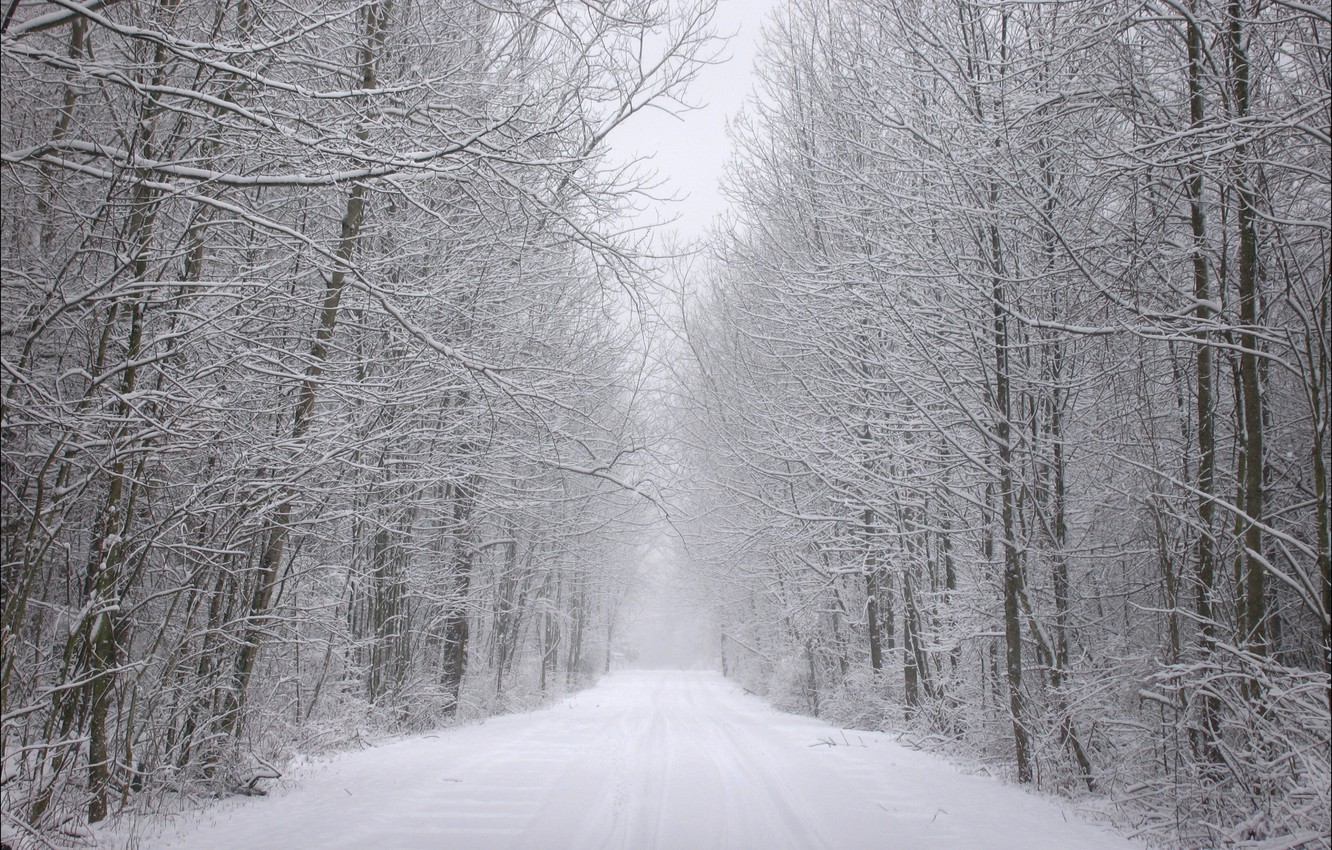 Photo wallpaper winter, frost, road, forest, snow, trees, traces