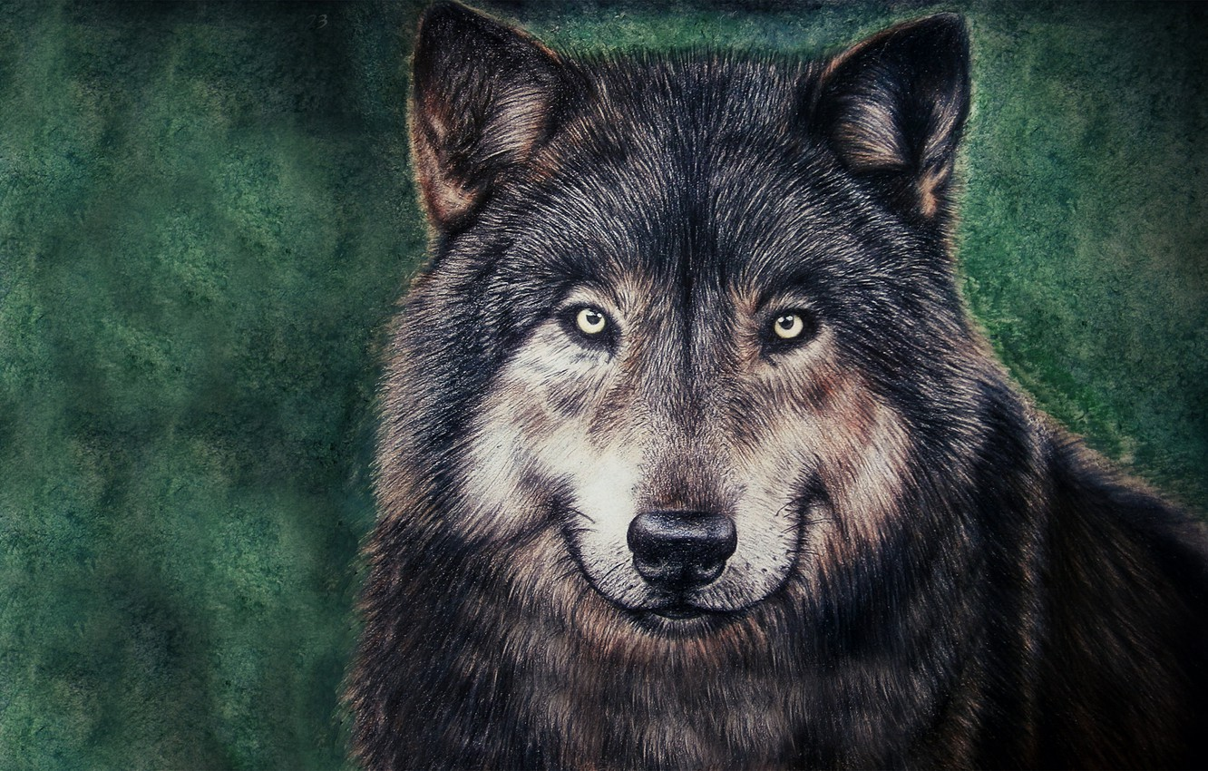 Photo wallpaper face, wolf, painting, wolf