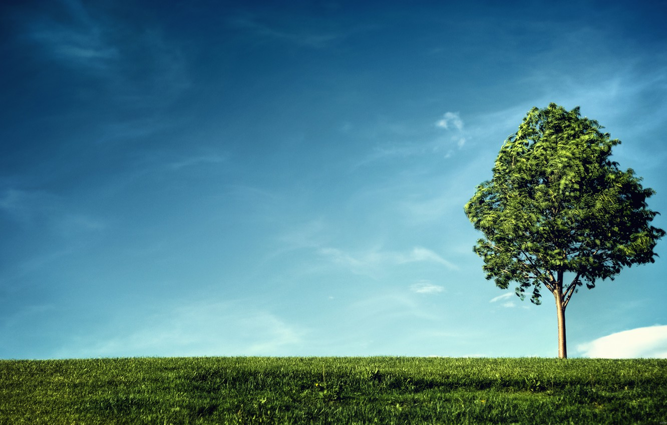 Photo wallpaper greens, the sky, grass, leaves, clouds, branches, life, tree, the wind, earth, green, branch, foliage, …
