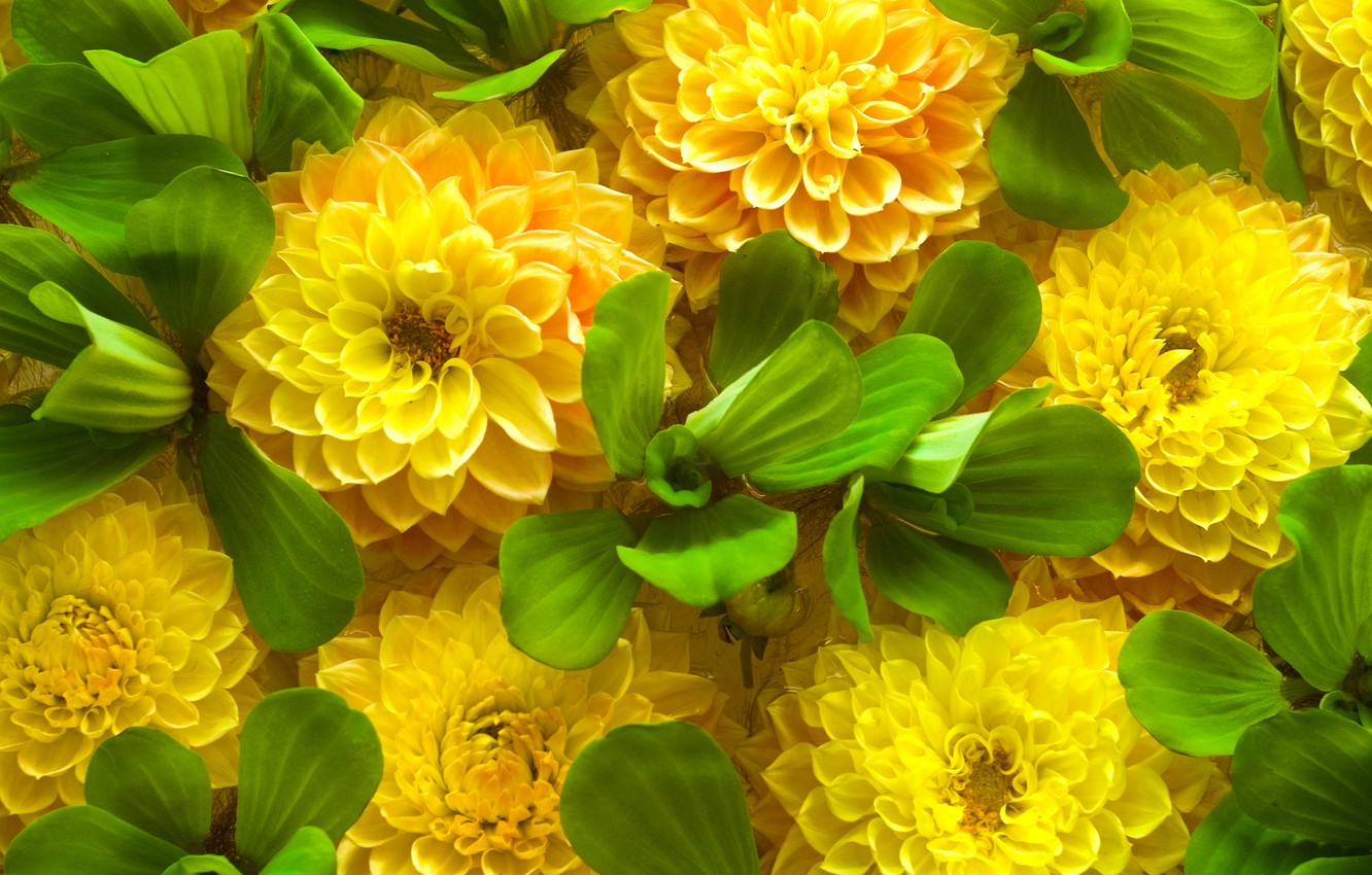 Photo wallpaper green leaves, spring, yellow flowers