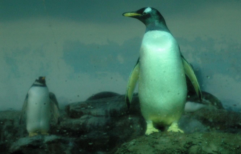 Photo wallpaper drops, stones, Penguins