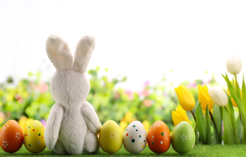 Photo wallpaper flowers, eggs, spring, rabbit, Easter, tulips, flowers, tulips, spring, Easter, eggs, decoration, Happy