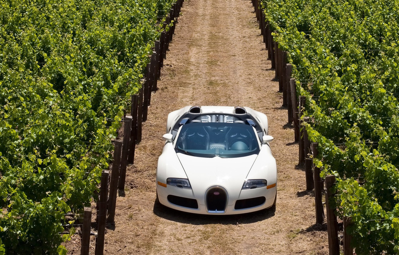 Photo wallpaper Sports CAR, PLANTASIA, WHITE, GRAPE