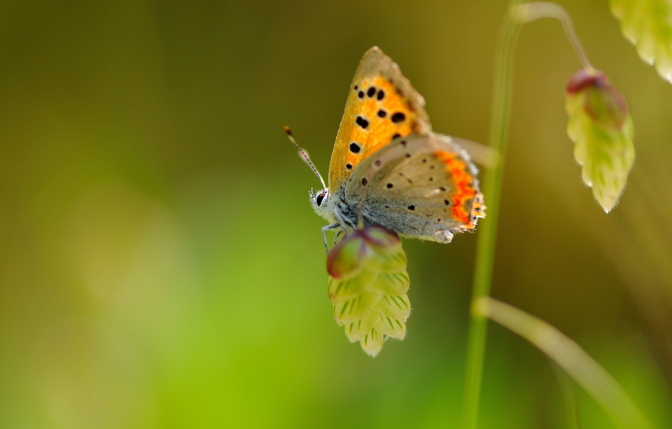 Photo wallpaper macro, butterfly, plant, wings, insect, speck