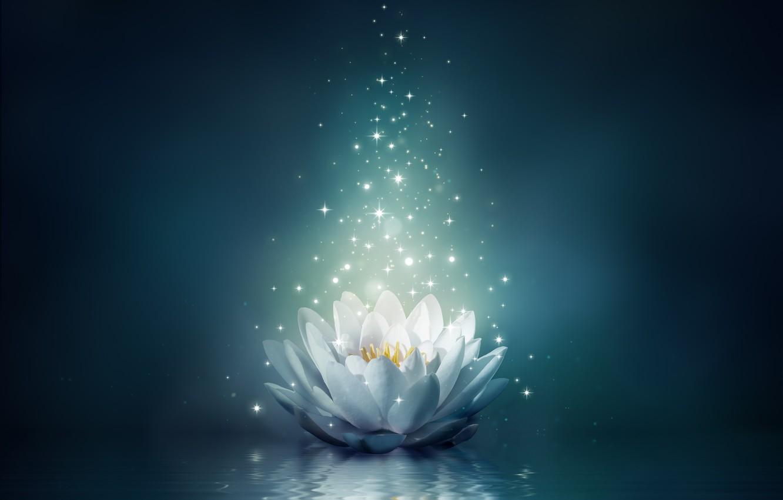 Photo wallpaper flower, water, lights, Lotus, flower, water, sparkle, bloom, water lily