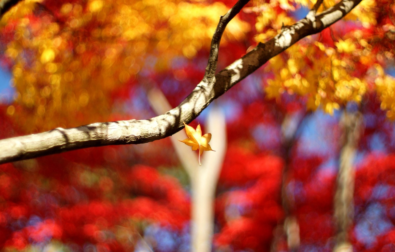 Photo wallpaper leaves, macro, trees, background, tree, Wallpaper, blur, branch, leaf, wallpaper, leaves, widescreen, background, leaves, macro, …