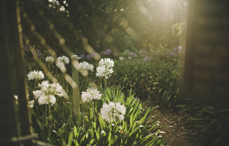 Photo wallpaper grass, flowers, white