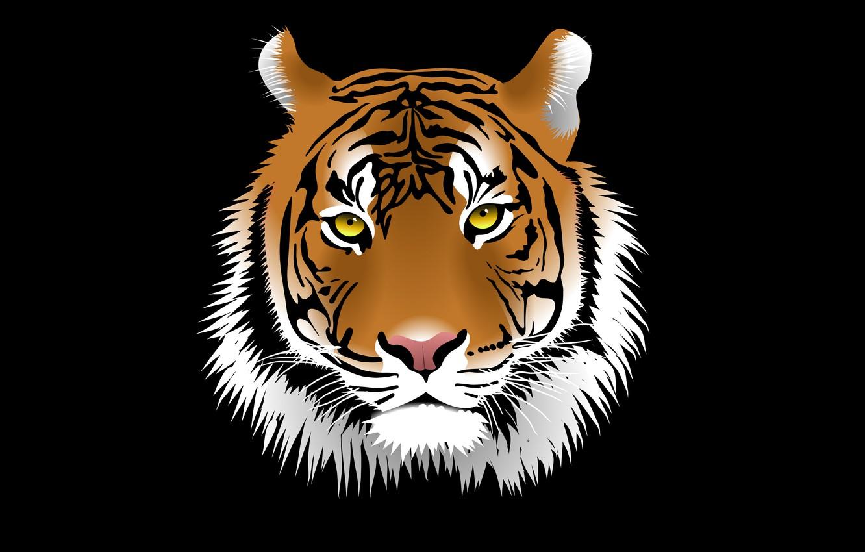 Photo wallpaper face, tiger, the dark background, tiger