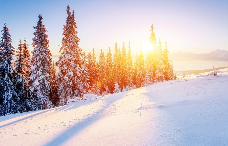 Photo wallpaper Nature, Winter, Snow, Spruce, Landscape, Seasons
