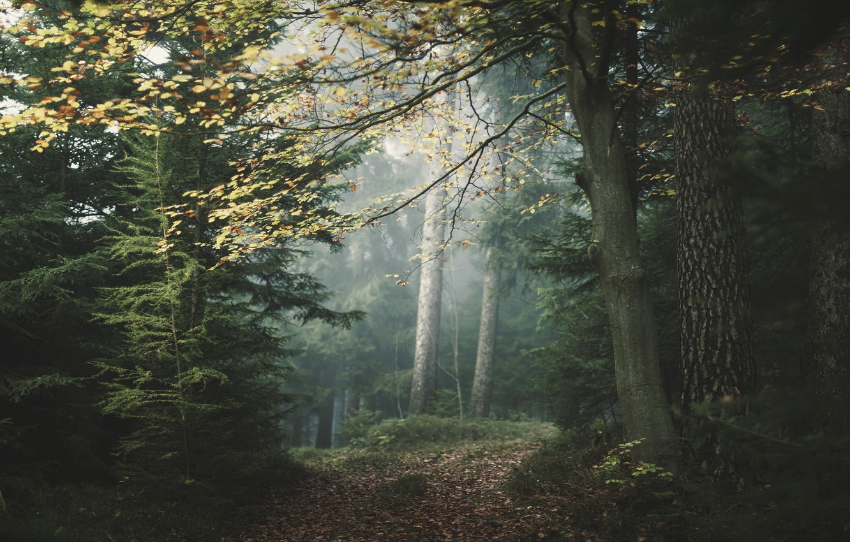 Photo wallpaper forest, landscape, nature, fog