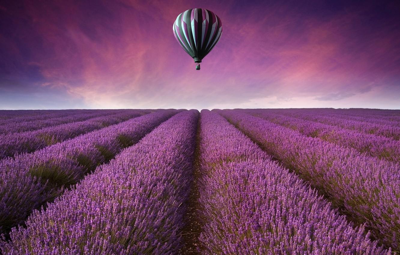 Photo wallpaper field, the sky, landscape, flowers, nature, background, widescreen, Wallpaper, field, ball, purple, air, wallpaper, widescreen, …