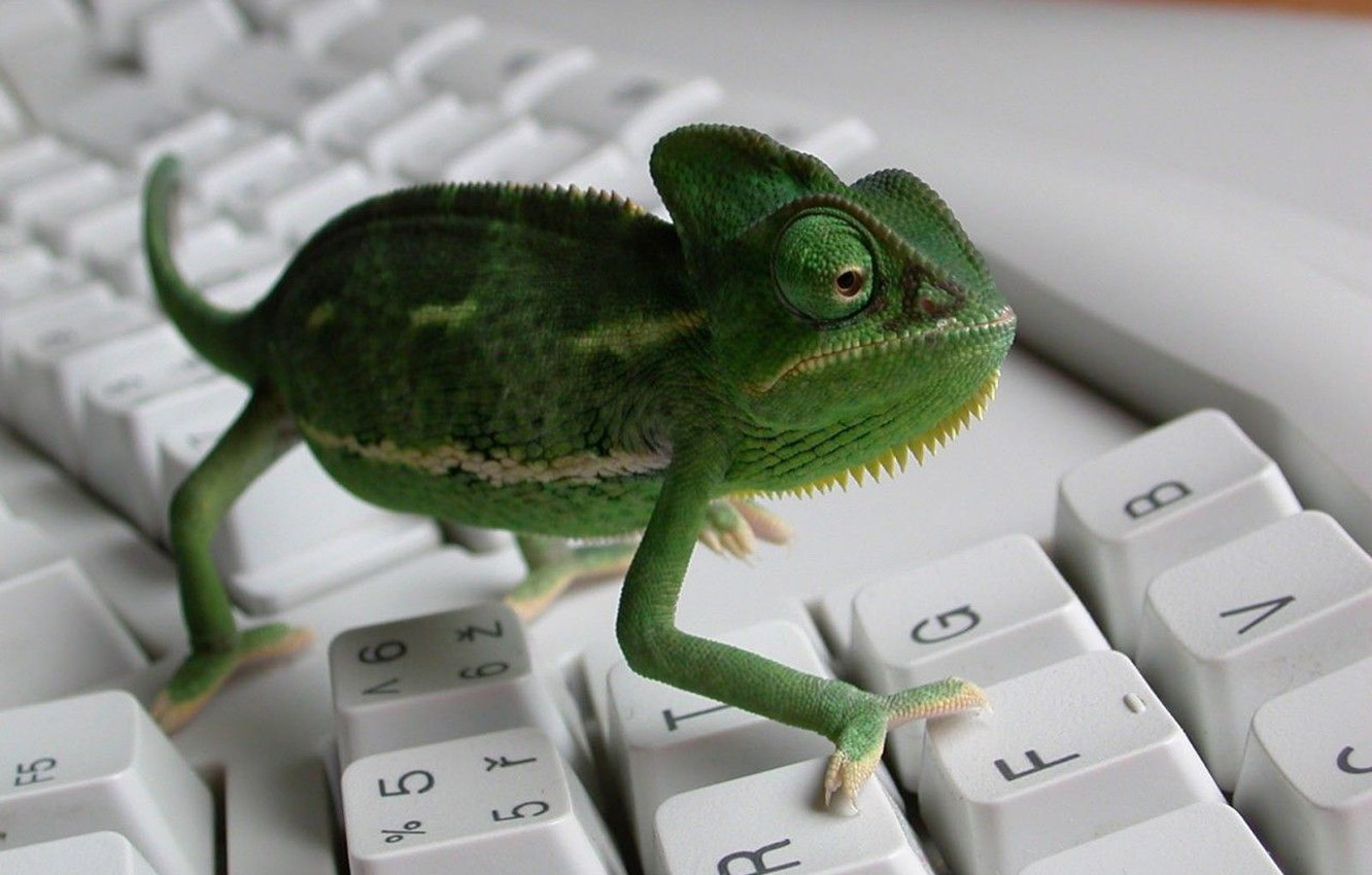 Photo wallpaper chameleon, keyboard