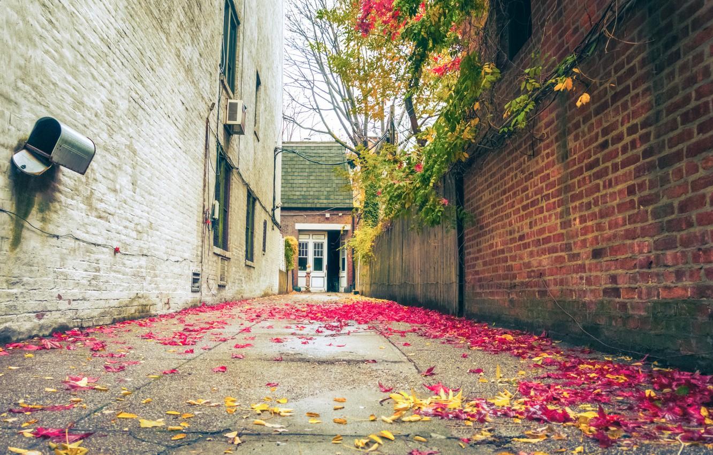 Photo wallpaper United States, Brooklyn, New York City, autumn, fall, foliage, mail