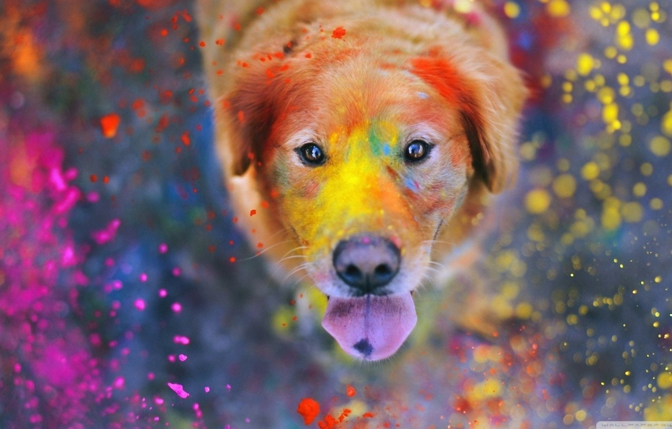 Photo wallpaper colorful, eyes, dog, dust, color, bokeh, animal, paint, funny, cute, situation, looking up, tongue, nose, …