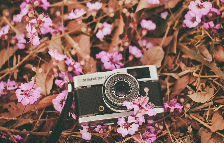 Photo wallpaper flowers, camera, petals, the camera, lens, pink
