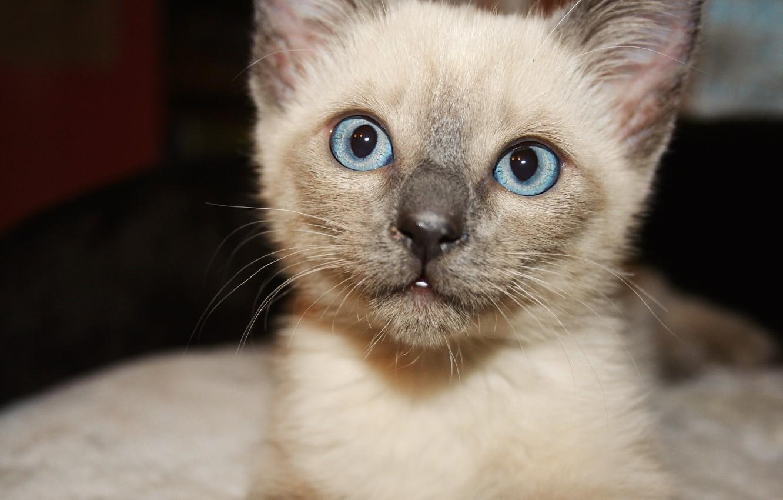 Photo wallpaper cat, eyes, blue