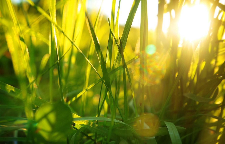 Photo wallpaper summer, grass, light