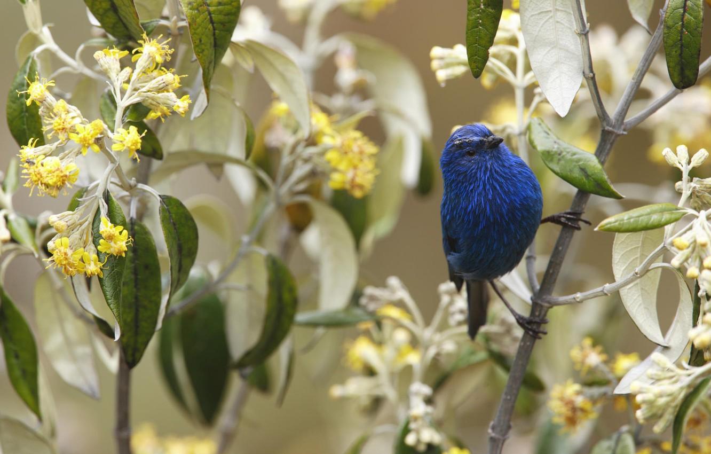 Photo wallpaper flowers, branch, bird