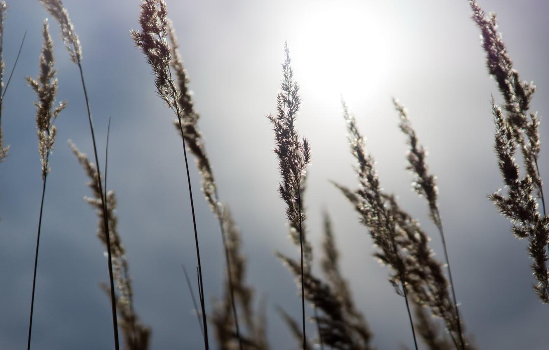 Photo wallpaper the sky, grass, the sun, heat