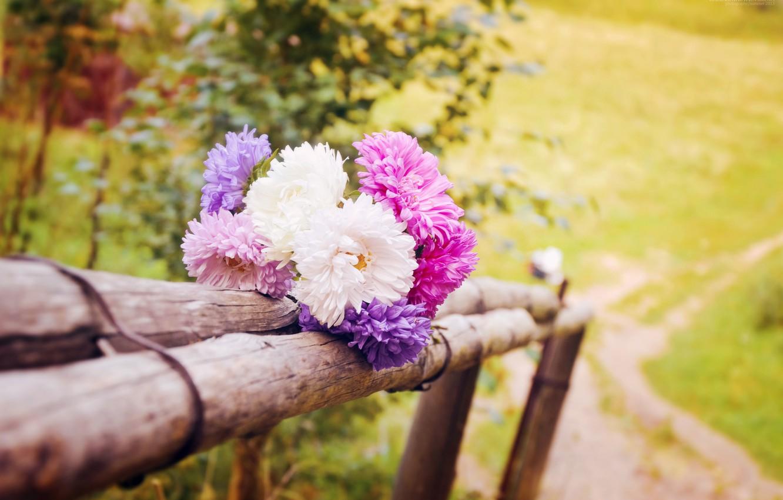 Photo wallpaper summer, macro, landscape, flowers, nature, photo, cute, beautiful, summer, flowers, cottage