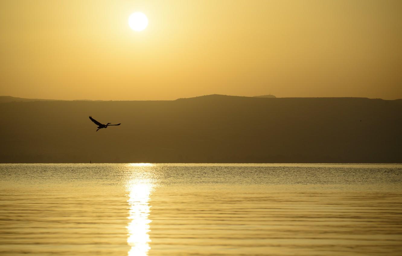 Photo wallpaper sea, night, bird, flight