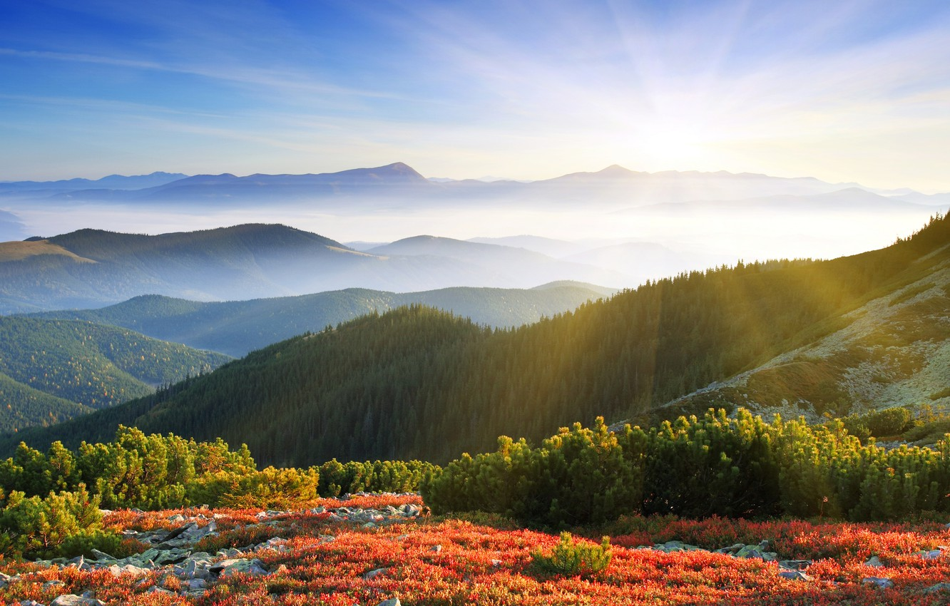 Photo wallpaper forest, the sun, rays, mountains, nature, fog, dawn, morning
