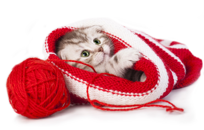 Photo wallpaper tangle, hat, baby, kitty, thread, Scottish fold, Scottish fold cat