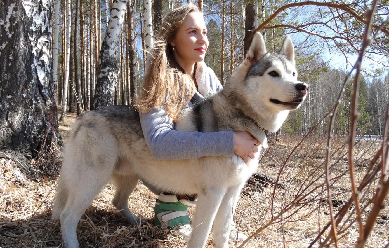 Photo wallpaper forest, girl, nature, dog, husky, Ural