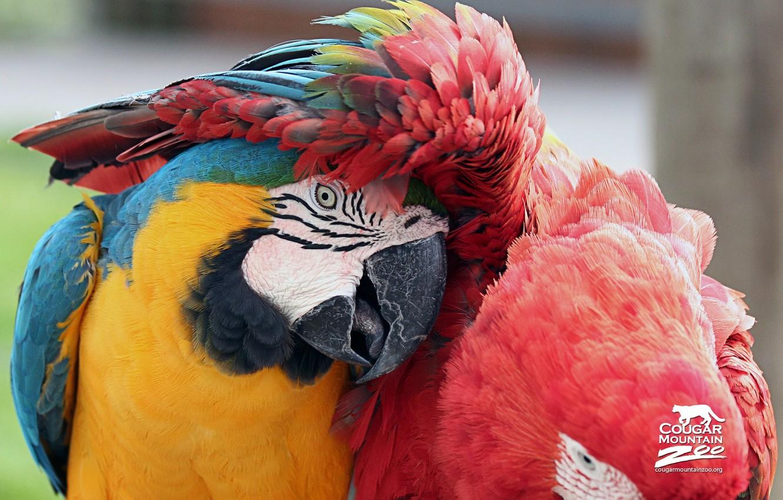 Photo wallpaper parrot, Bird, Macaws, Best Friends Macaws