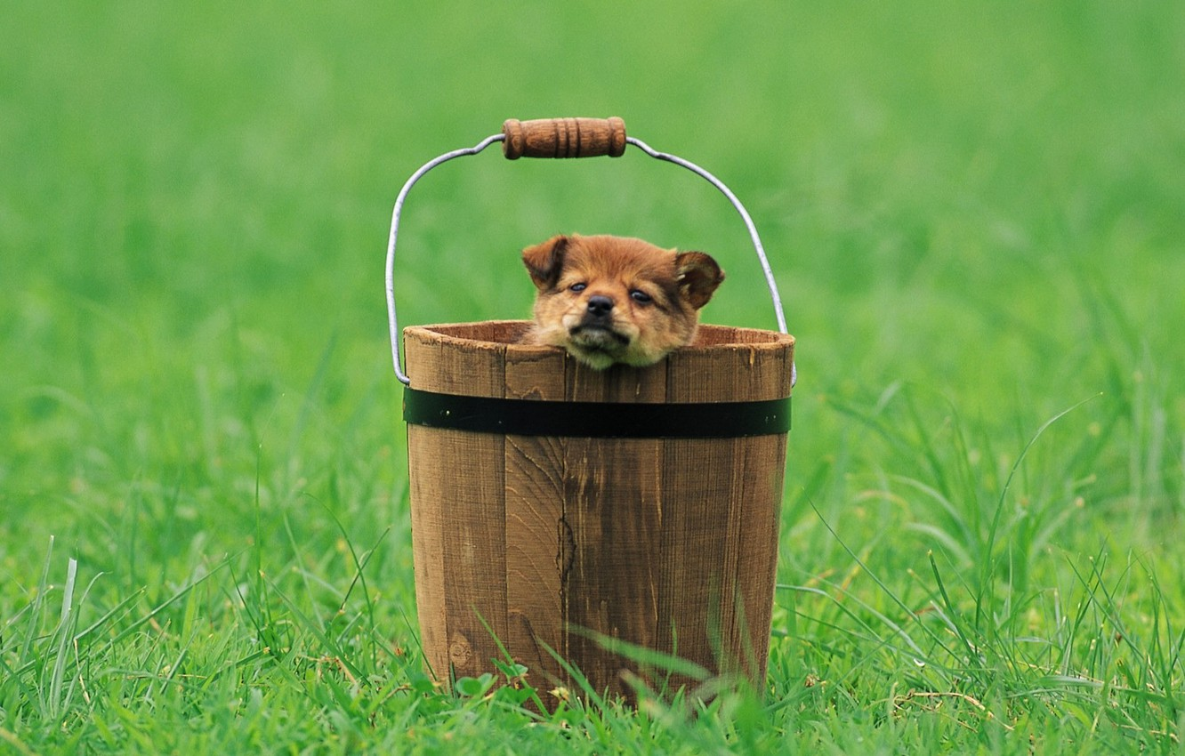 Photo wallpaper look, bucket, puppy, clearing