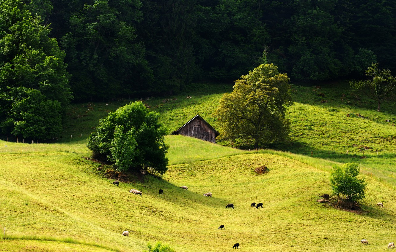 Photo wallpaper forest, grass, tree, hills, sheep, meadow, house