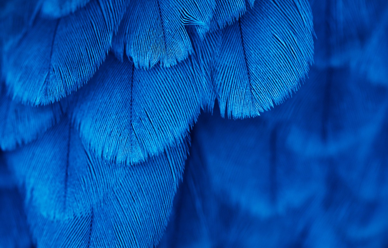 Photo wallpaper bird, texture, feathers, blue
