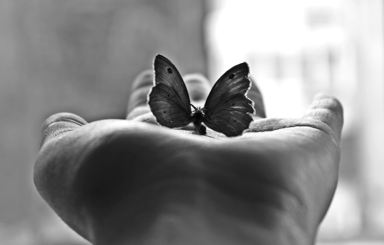 Photo wallpaper Minimalism, Butterfly, Palm, Black-And-White Photograph