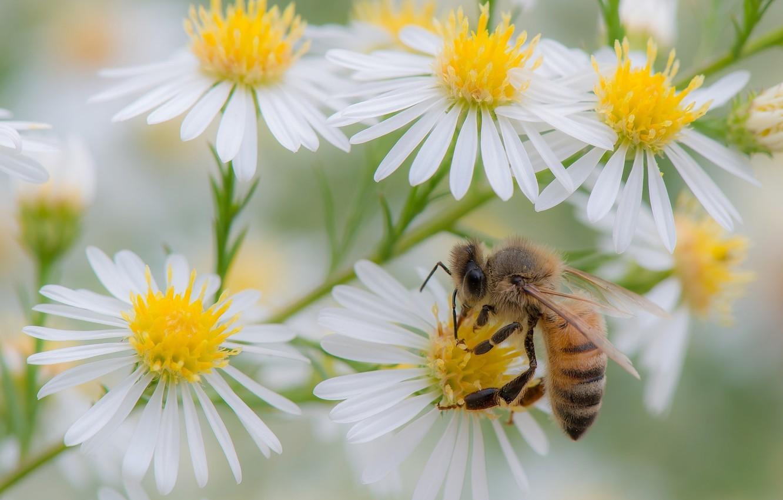 Photo wallpaper summer, flowers, bee