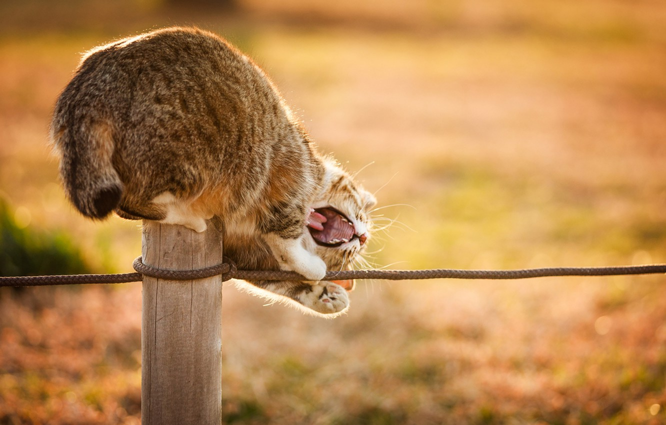 Photo wallpaper cat, cat, the sun, nature, rope, mouth, plays, column
