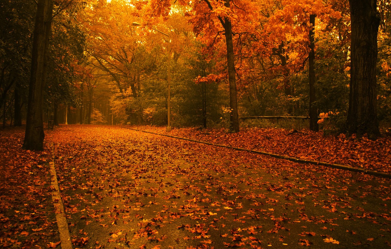 Photo wallpaper road, autumn, leaves, Trees