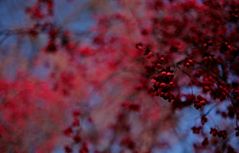 Photo wallpaper blue, red, Tree, blur, fruit, bokeh