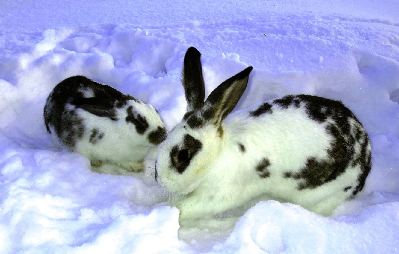 Photo wallpaper winter, snow, Nature, rabbits, the snow, two, rabbit, rabbit, butterfly.