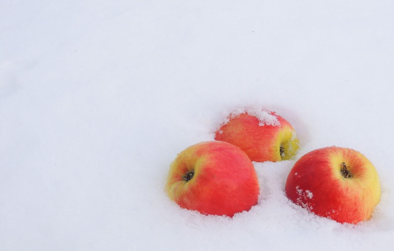 Photo wallpaper winter, snow, apples, frost