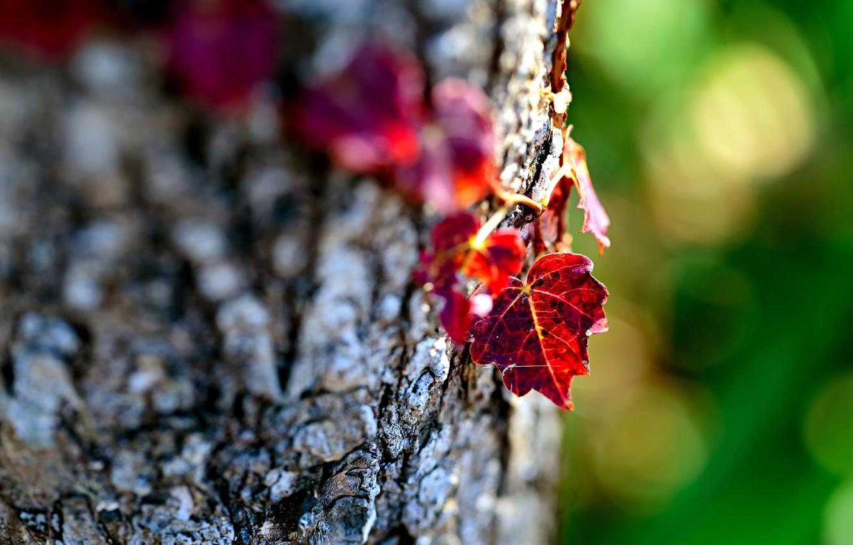 Wallpaper Leaves Macro Nature Tree Focus Blur Bark