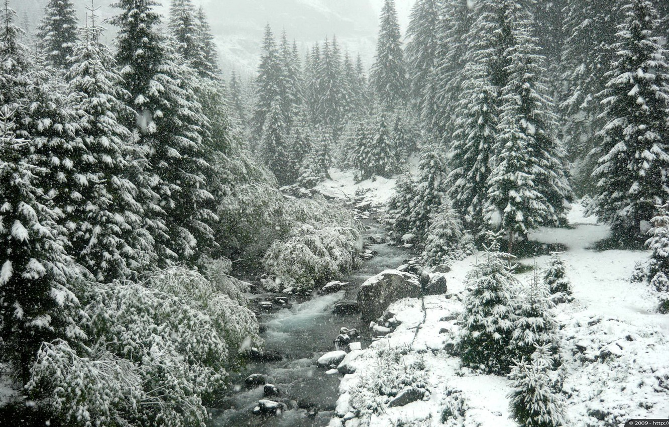 Photo wallpaper winter, forest, snow, trees, nature