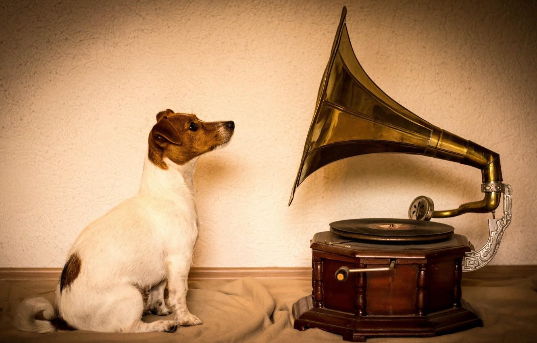 Photo wallpaper dog, gramophone, Jack Russell Terrier