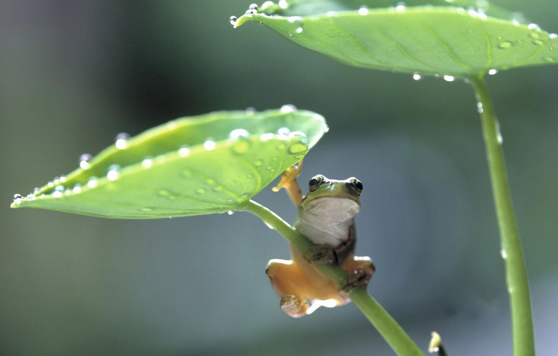 Photo wallpaper leaves, frog, frog