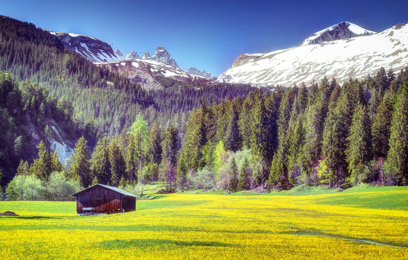 Photo wallpaper field, forest, grass, trees, flowers, mountains, yellow, house